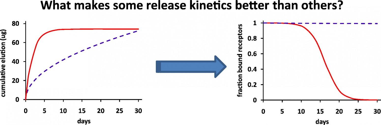 releasekinetics