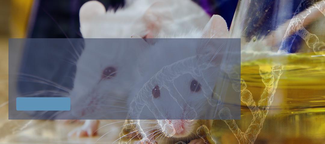 Meta Slider - HTML Overlay - homeslidemodel